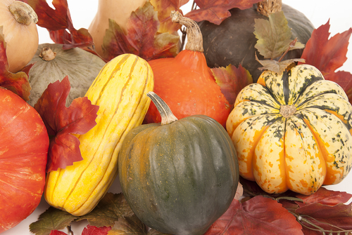 Fall harvest of squash with a white background