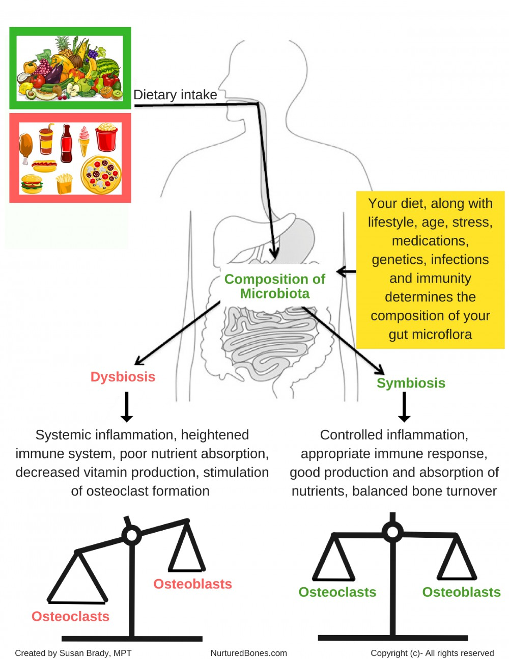 Your diet determines the composition of your microflora